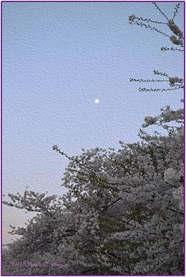 Moon In Cherry Blossom Poster by Sonali Gangane