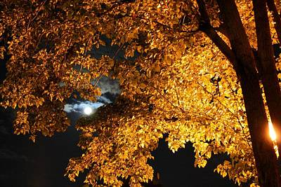 Moonlight Poster by Dan Stone