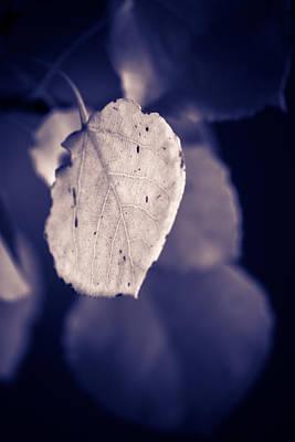 Moonlit Aspen Leaf Poster