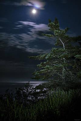 Moonlit Treescape Poster