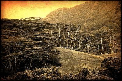 Moorea Landscape Poster