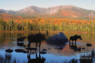 Moose Family Scenic Poster