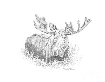Moose In Velvet Poster