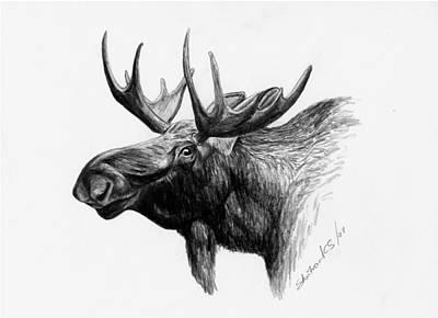 Moose Poster by Sheri Marean