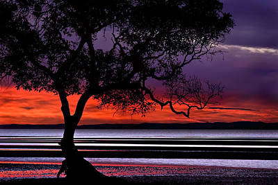 Moreton Bay View Poster