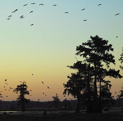 Poster featuring the photograph Morning Birds by Silke Brubaker
