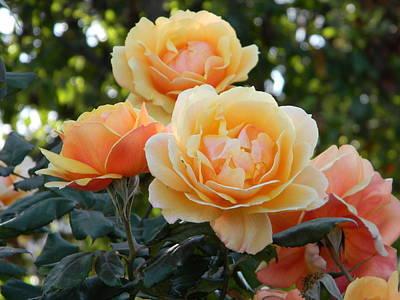 Morning Blooms Poster
