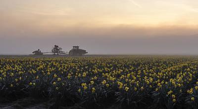 Morning Daffodil Fog Poster