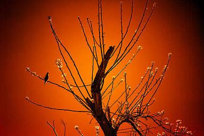 Morning Dove Sunrise Poster