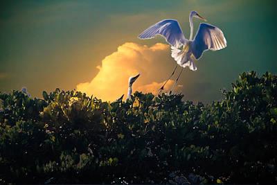 Morning Egret Poster