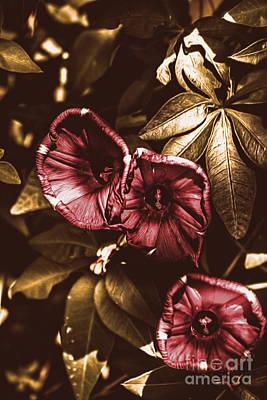 Morning Glory Flower Art Poster by Jorgo Photography - Wall Art Gallery