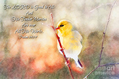 Morning Goldfinch - Digital Paint And Verse Poster by Debbie Portwood