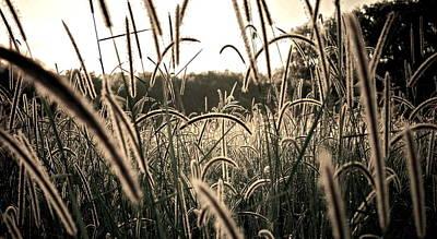 Morning Grasses  Poster