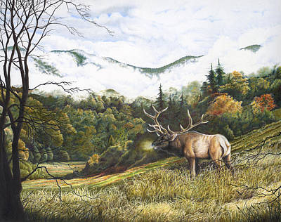 Morning In The Valley Elk In Cataloochee Valley Poster by Richard Devine