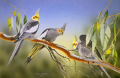 Morning Light - Cockatiels Poster by Frances McMahon