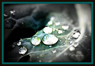 Poster featuring the photograph Morning Rain by Michaela Preston