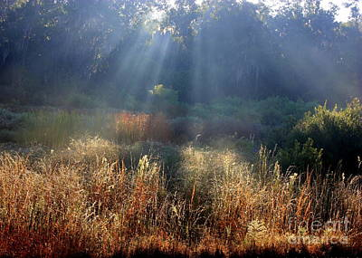 Morning Rays Through Live Oaks Poster by Carol Groenen