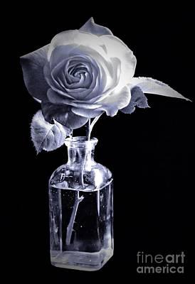Morning Rose Cyan Poster