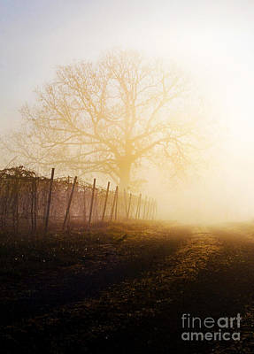 Morning Vineyard Poster by Shannon Beck-Coatney