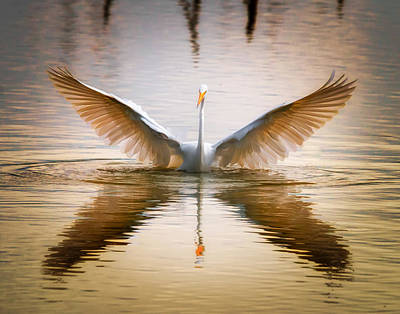 Morning Wings An Egret Awakes Poster