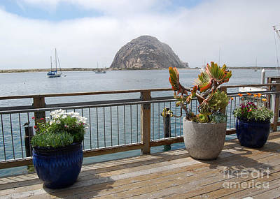 Poster featuring the photograph Morro Bay And Plants by Debra Thompson