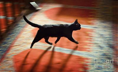 Mosque Cat Poster