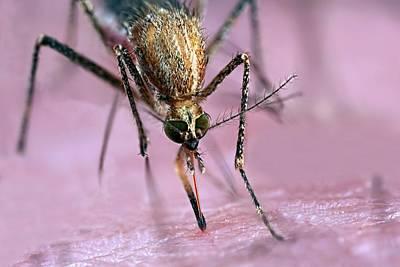 Mosquito Biting Hand Poster