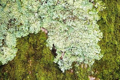 Moss And Lichen On A Tree At Clappersgate Poster
