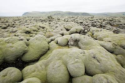 Moss Covered Lava Fields Poster by Ashley Cooper