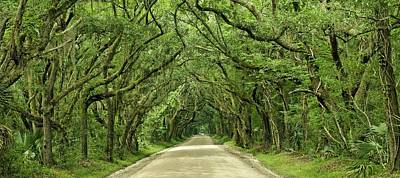 Moss Covered Trees On Botany Bay Road  Edisto Island Sc Poster