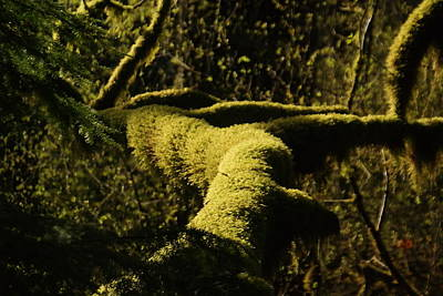Moss In A Sliver Of Sun Poster by Jeff Swan