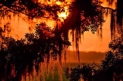 Moss Meets Sun  Poster