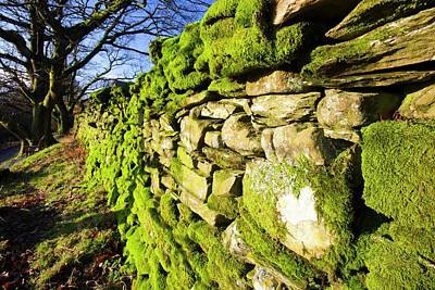Moss On A Drystone Wall Poster