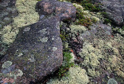 Moss On Rock-lubec-maine Poster by Harold E McCray