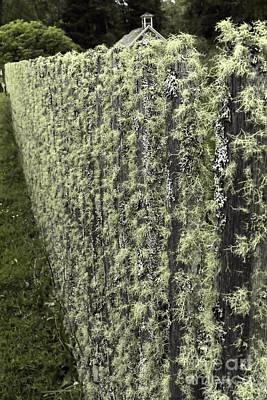 Mossy Fence Poster by Jean OKeeffe Macro Abundance Art