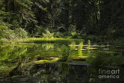 Mossy Spring-fed Pond Poster