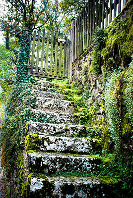 Mossy Stairs Poster by David Waldo
