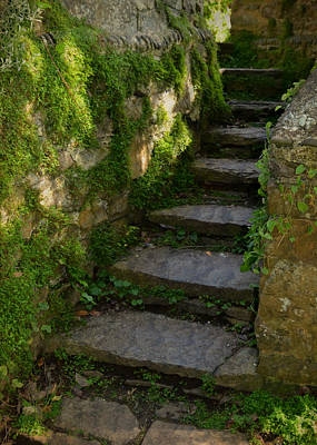 Mossy Steps Poster by Carla Parris