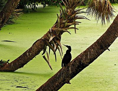 Mossy Wetland With Anhinga Poster by MTBobbins Photography
