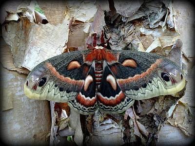 Moth On Paper Birch Poster