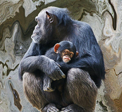 Mother And Child Chimpanzee 2 Poster by Daniele Smith