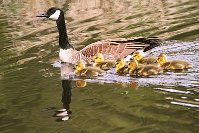 Mother Goose And Babies Poster by Peggy Collins