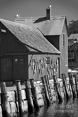 Motif Number One Bw Black And White Rockport Lobster Shack Maritime Poster by Jon Holiday