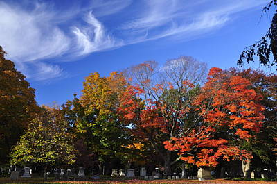 Mount Auburn Foliage Poster by Michael Dyer