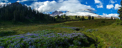Mount Baker Lupine Meadows Poster by Mike Reid