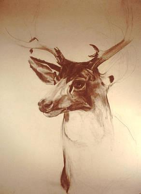 Deer Mount Poster