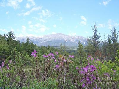 Mount Katahdin And Wild Flowers Poster by Joseph Marquis
