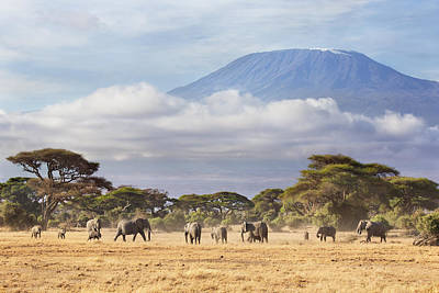 Poster featuring the photograph Mount Kilimanjaro Amboseli  by Richard Garvey-Williams