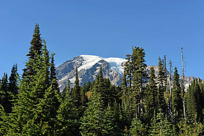 Poster featuring the photograph Mount Rainier Evergreens by Anthony Baatz