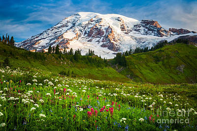Mount Rainier Flower Meadow Poster by Inge Johnsson